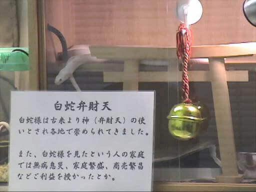 shirohebisama001003