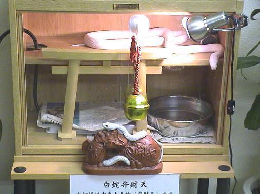 shirohebisama008001