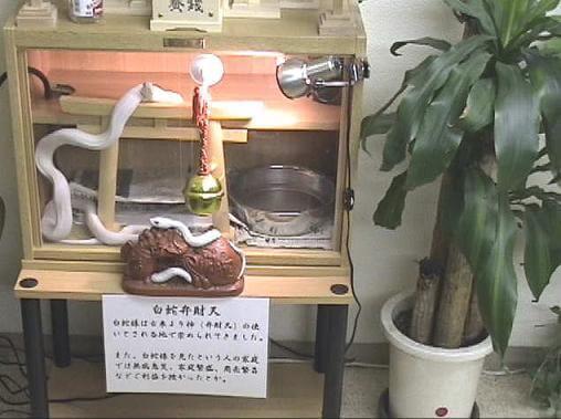 shirohebisama009001